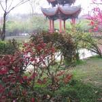 Springtime garden, Chengdu
